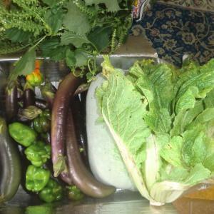 来客に野菜を差し上げるのは時間節約になり大歓迎