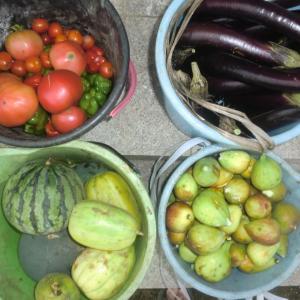 野菜の収穫はバケツ2×n、今日の収穫はn=2で4バケツ