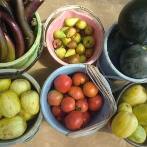 野菜の収穫はバケツ2×n、今日の収穫はn=3で6バケツ