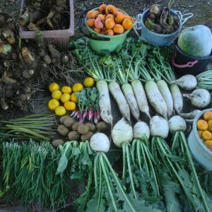 今日はたくさんの野菜を収穫