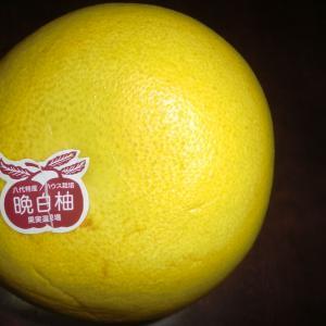 晩白柚を初めて食べた