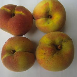 最後の桃を採りました