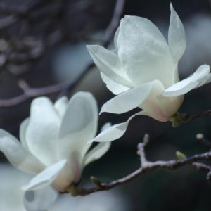 中国イケメン図鑑9 チュー・イーロン(朱一龙)、ガオ・ウェイグァン