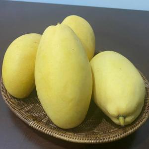 マンゴーの季節がやってきた