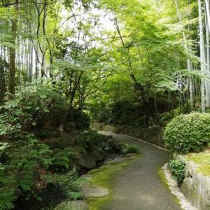 竹林の道、丈山苑~その一
