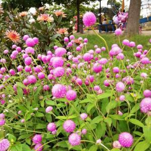 元気いっぱい夏の花々~♪
