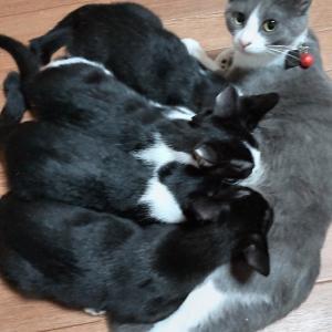 でっかい赤ちゃん猫たち