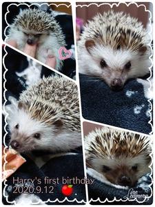ハリーくんお誕生日でしたっ