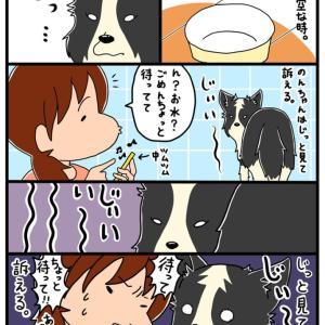 【犬漫画】のんちゃんはぜったいに諦めないし待ってもくれない