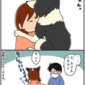 【犬漫画】のんちゃんは病院嫌いを背中で語る