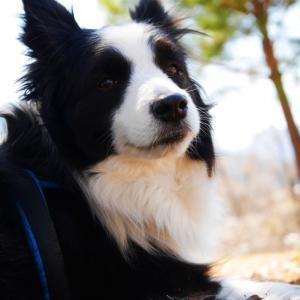 表情を見て犬の気持ちを読み取ろう!のんちゃんのサンプル写真で解説
