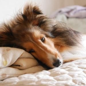 犬に暴力を振るう原因は「自尊心」にあり!