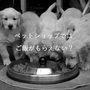 ペットショップではご飯がもらえないせいで子犬が死んでいる!店で一番多い子犬の死因