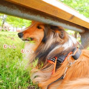 犬は遊びを考える天才!創造性を大事にしよう