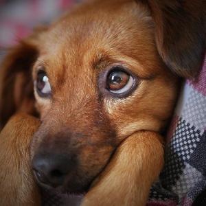 犬を「NO!」でしつける問題点
