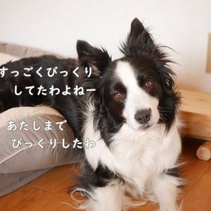 犬で判断されてる。