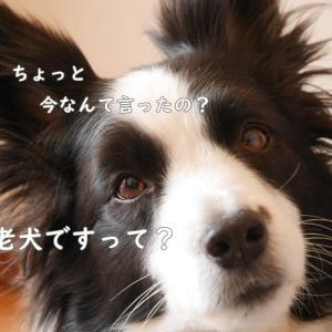 のんちゃんは老犬。