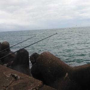 今日もサンマ偵察。たまには投釣りでも。