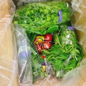 鎌倉野菜@ふるさと納税返礼品