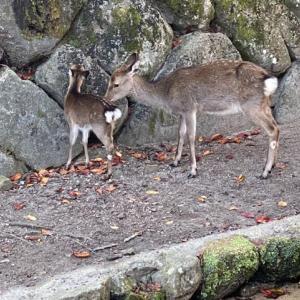 広島•宮島の旅14(宮島食べ歩き)