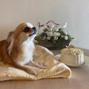 延期していたお誕生日ケーキ、めしあがれ!