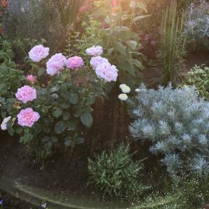 本日の 私の「天使が遊ぶ庭」