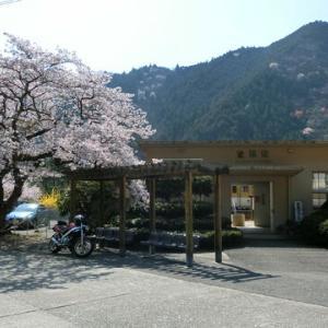 桜の季節にキハ58系に会いに行く