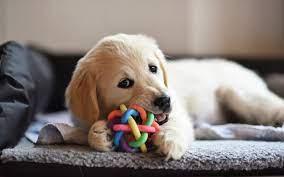犬のストレス発散には知育玩具がおススメ!