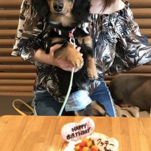 1stHappy  birthday☆*°