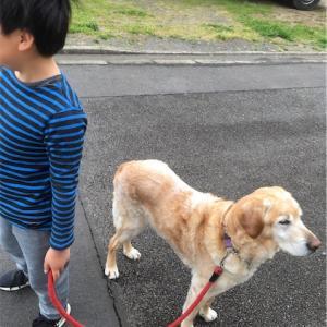 お散歩で張り切るおじさん