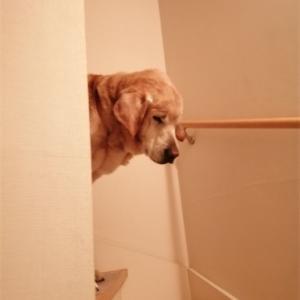 階段昇降上手なおじさんです