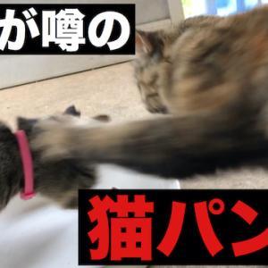 猫パンチ一発で野良猫カーストを思い知る猫たち