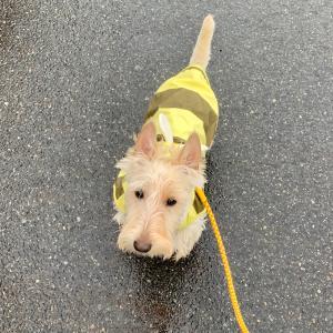雨はハチさん。