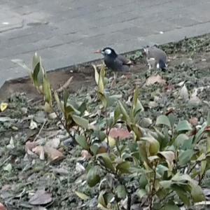 【5歳】鳥が好きでも寄っていくのは危ない鳥