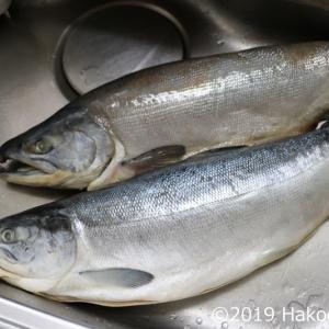 紅鮭(ベニサケ)で鮭とばを作ったら激ウマだった!