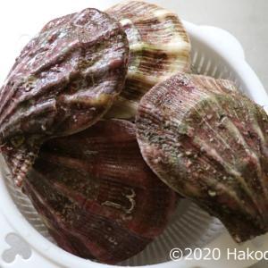 エゾキンチャクガイ(蝦夷巾着貝、ババノテ、母貝)の刺身を作る