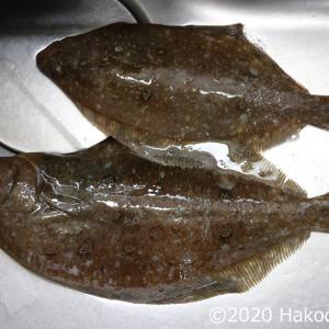 ムシガレイ(水草カレイ)の美味しい食べ方4選~コスパも最高!