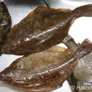 頂いたマコガレイを捌いていたら、最後は海鮮丼になった件