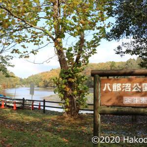 八郎沼公園へ行って来た!~2020北斗紅葉回廊