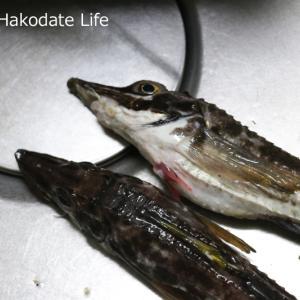 ハッカク(八角・トクビレ・特鰭)の軍艦焼き(味噌焼き)を作る~捌き方と作り方
