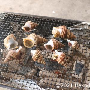 灯台つぶを炭火焼にする~こいつはBBQに一番ピッタリのつぶ貝だ!