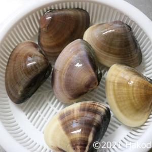 蛤(ハマグリ)のしゃぶしゃぶを作る~出汁が旨い貴重な一品