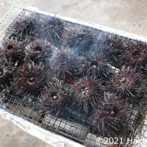 キタムラサキウニを炭火焼にする