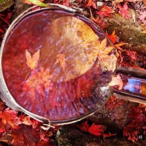 バケツの中の紅葉