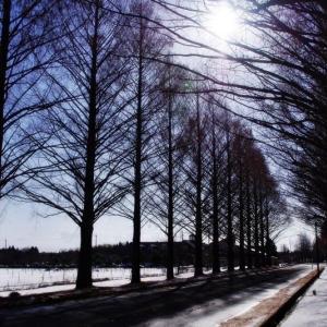 春 の 雪