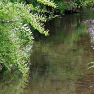 夏 の 水