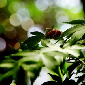 秋 の 蜂