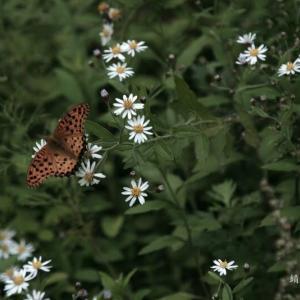晩 秋 の 蝶