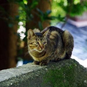 猫 緊 張