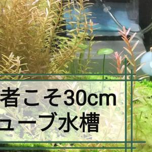 【アクアリウム】初心者には60cm規格水槽より30cmキューブ水槽がおすすめです!!